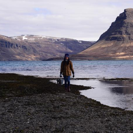 Foraging in Iceland